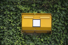 Public letterbox covered in ivy Royalty Free Stock Photos