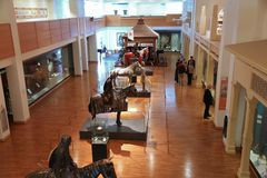 Public museum Royalty Free Stock Photo