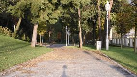Public park in autumn. With drop leaves stock video