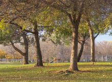 Public Park in Beautiful Light Royalty Free Stock Photo