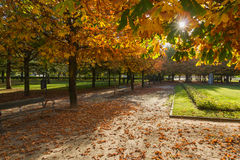 Public Park with Chestnut in Fall Stock Images