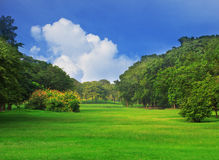 Public park in the city and blue sky white cloud Royalty Free Stock Images