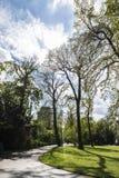 Public park in Dusseldorf, Germany. Public park full of trees in Dusseldorf, Germany stock photo