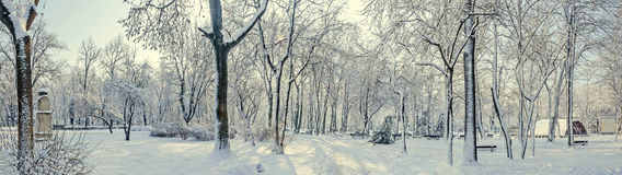 Public park from Europe with trees and branches covered with snow and ice, benches, light pole, landscape Stock Photos