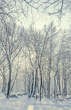 Public park from Europe with trees and branches covered with snow and ice, benches, light pole, landscape Royalty Free Stock Image