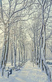 Public park from Europe with trees and branches covered with snow and ice, benches, light pole, landscape Stock Photo