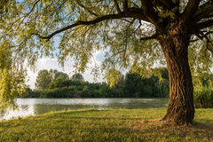 Public park in Ferrara city Royalty Free Stock Image