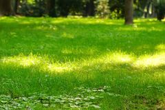Public Park Fresh Lawn With Morning Sun Light In Perspective Stock Photo
