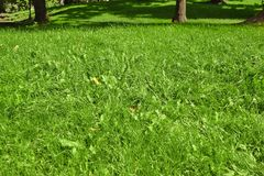Public Park Fresh Lawn With Morning Sun Light In Perspective Royalty Free Stock Photos