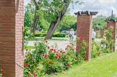 The public park Herastrau with red bush roses, green grass, blue clouds sky Stock Photography