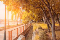 Public park landscape images , Autumn landscape with trees Stock Photos