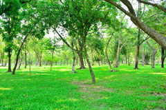 Public park with lawn trees Royalty Free Stock Images