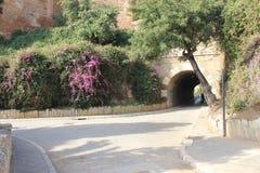 Public park in Malaga Royalty Free Stock Photography