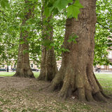Public park with old trees. The Circus,  Bath, Somerset, UK Royalty Free Stock Photo