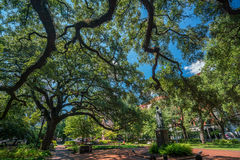 Public Park in oldtown Savannah, Georgia. In USA Royalty Free Stock Photo