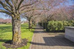 Public park in Salem Oregon. Public park and tree row in Salem Oregon Royalty Free Stock Photo