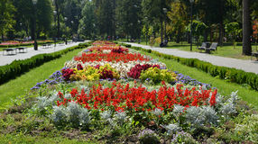 Public Park in Serbia. Decorative flowers in a public park in Serbia in summertime Royalty Free Stock Images