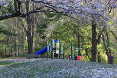 Public Park in Spring Stock Photography