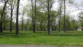 Public Park stock video
