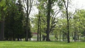 Public Park stock footage
