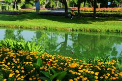 Public park at Suanluang Rama 9. Asia Thailand Flower and tree gardens of various colors and varieties. Beautiful public parkland Suan Luang R.9 in Bangkok royalty free stock photography