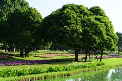 Public park at Suanluang Rama 9. Asia Thailand Flower and tree gardens of various colors and varieties. Beautiful public parkland Suan Luang R.9 in Bangkok stock image