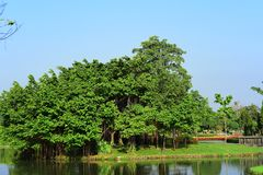 Public park at Suanluang Rama 9. Asia Thailand Flower and tree gardens of various colors and varieties. Beautiful public parkland Suan Luang R.9 in Bangkok stock photography