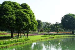 Public park at Suanluang Rama 9. Asia Thailand Flower and tree gardens of various colors and varieties. Beautiful public parkland Suan Luang R.9 in Bangkok royalty free stock photos