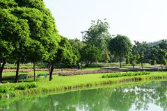 Public park at Suanluang Rama 9. Asia Thailand Flower and tree gardens of various colors and varieties. Beautiful public parkland Suan Luang R.9 in Bangkok royalty free stock photo