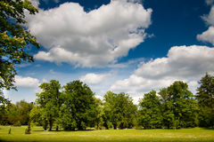 Public park in summer. Royalty Free Stock Photos