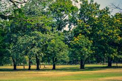 Public park with trees and garden.Nature landscape and sky background.Spring summer nature park. In city royalty free stock image