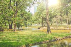 Public park with trees , river and sky background in city.Beautiful green park in the city. On one morning royalty free stock image