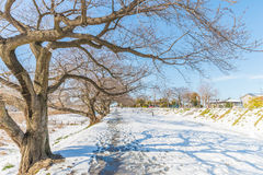 Public park with white snow Stock Image
