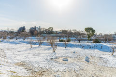 Public park with white snow Royalty Free Stock Photo