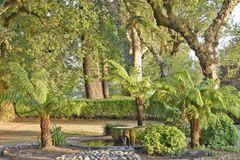 Public parkland summer foliage Galicia Spain stock photography