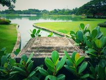 Public parks, trees and green plants,. And rivers for daytime nature and refreshing air Stock Photos