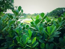 Public parks, trees and green plants,. And rivers for daytime nature and refreshing air Stock Photo