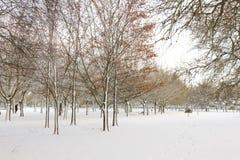 Public Snowy Winter Park Royalty Free Stock Image