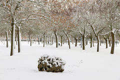 Public Snowy Winter Park Royalty Free Stock Photography