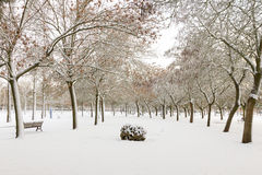 Public Snowy Winter Park. Urban park or green area in winter. The soil and the trees full of snow and volcanic rock in the foreground ornament stock photos