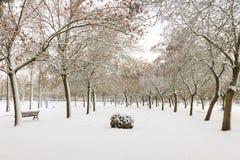 Public Snowy Winter Park Stock Photos