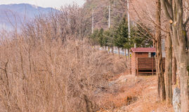 Public toilet in a wooded area Stock Images