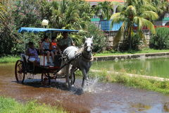 Public transport in Cuba. Horse-drawn carts in beautiful harness royalty free stock image