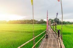 Bamboo handmade bridge on green rice field in Lampang Stock Image