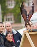 Public watching a Harris hawk Stock Photo