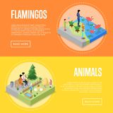 Public zoo isometric 3D posters set. Public zoo with wild animals and visitors isometric 3D posters set. People near flamingos and rabbits in cages. Zoo Stock Image