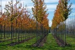 Publiek en privat tuin, parkenboomkwekerij in Nederland, spe stock foto