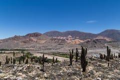 从Pucara de Tilcara的看法 库存照片