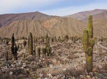 Pucara de Tilcara, Argentina royaltyfri fotografi