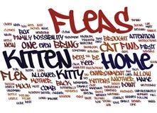 Puces et votre concept de Kitten Text Background Word Cloud Images stock